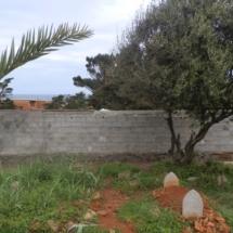 mur-crepis-11