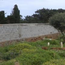 mur-crepis-3