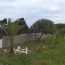 mur-crepis-5