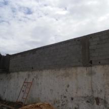 mur-crepis-6